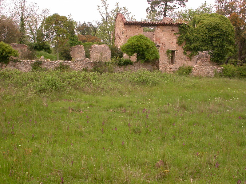 Pr 1446 Grime bij St Paul-en-Forêt
