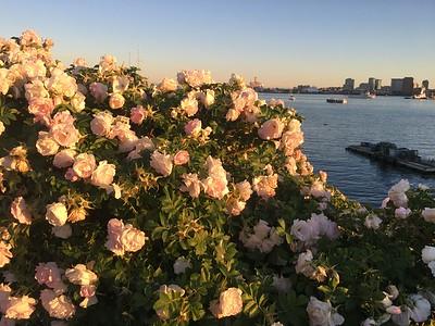 Boston Harbor near sunset