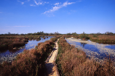 Salin de Madon marsh - walkway through the marsh