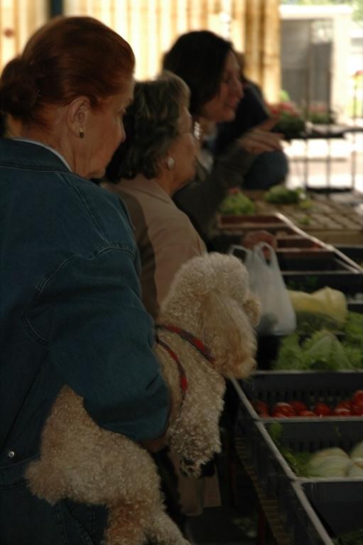 Poodle at Fresh Market - Pau, France