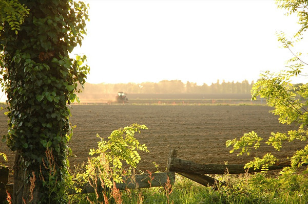 Bearnaise Farmlands - Bearn, France