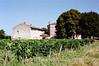 St Emillion - Vineyard 1