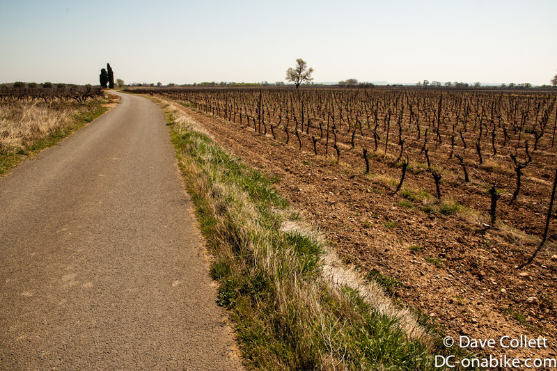 Minor roads through the vineyards