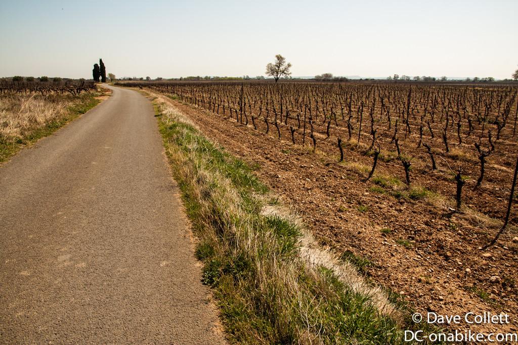Minor roads through the vineyards