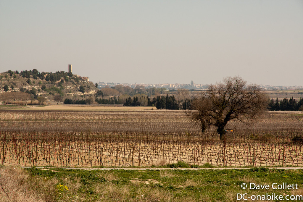 Vines and distant towns