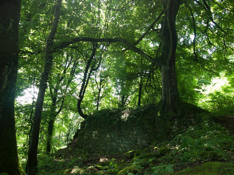 Tree outside Geroldseck
