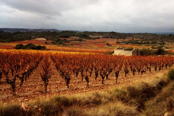 Vineyard in Autumn Colors - Languedoc, France