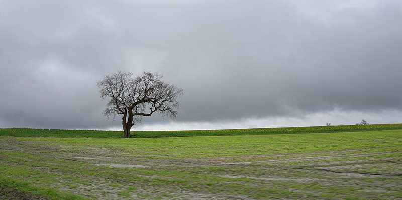 Lone Tree with Storm, near Fougeres, France.