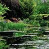 Claude Monet's Garden - Water Lilies Pond