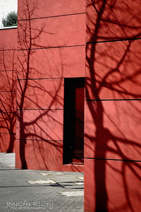 Tree Shadows on Pink Wall