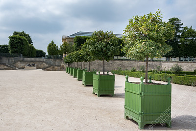 Paris - Jardin de Tuileries, orange trees