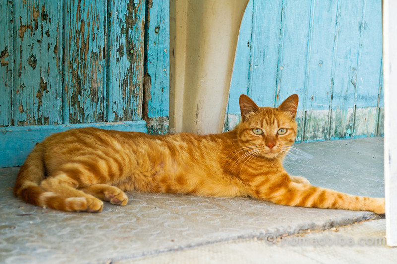 Lazy cat in Tautavel, France
