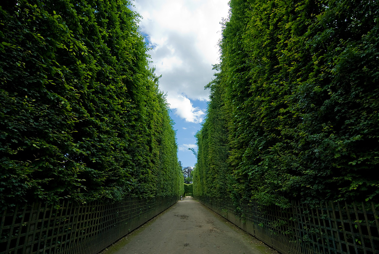 Narrow path with tall hedges at Gardens of Versailles - France