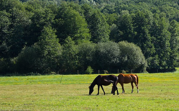 Countryside around Chevreuse