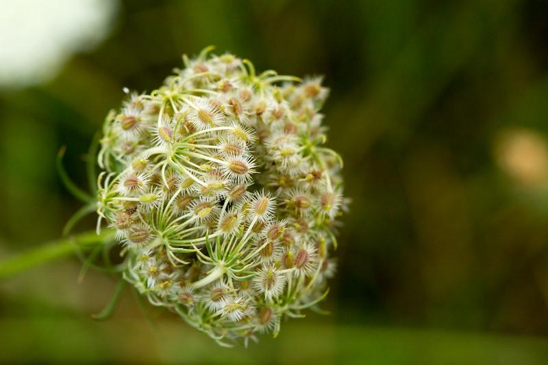 Prickly Petals