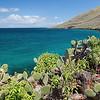 Cactus, Ocean, And Sky
