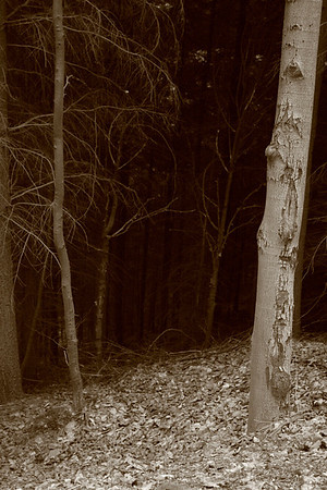 Forest near Merkur