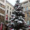 Cologne Christmas tree