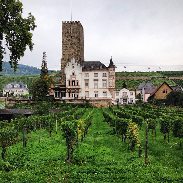 Every castle needs a vineyard. Boosenburg Castle, Rüdesheim. A slice of the Romantic Rhine. If you're drinking the wine, Rheingau is the region, Riesling is likely your grape. #Germany via Instagram http://ift.tt/1o1razS