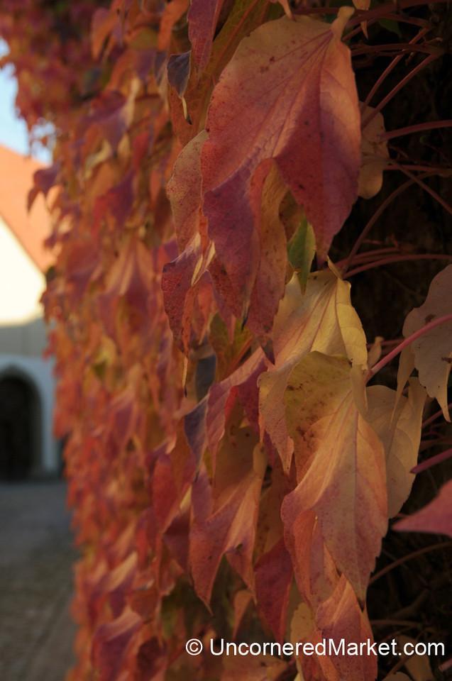 Changing Seasons - Frickenhausen, Germany