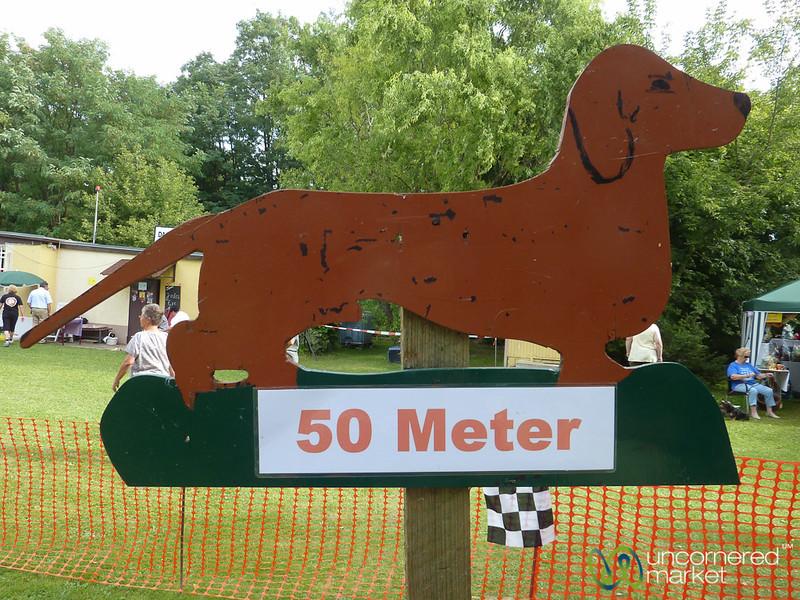 Dachshund Races, 50 meters  - Berlin