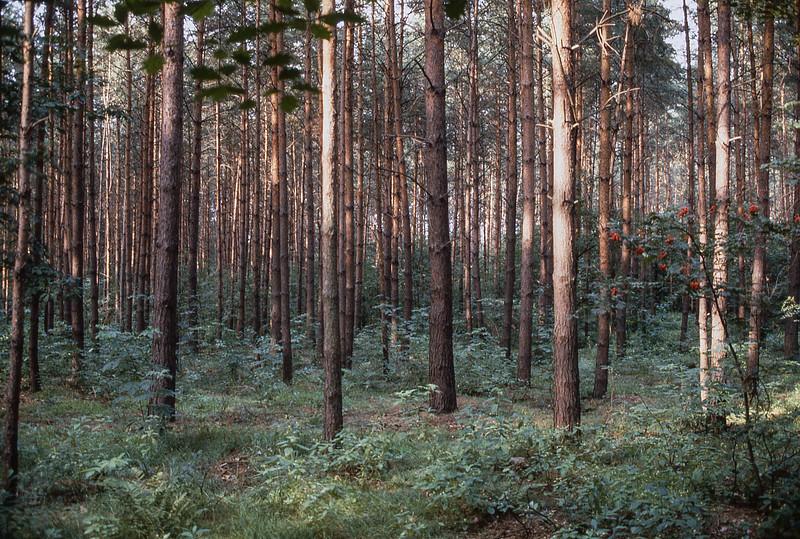 Berlin Forest
