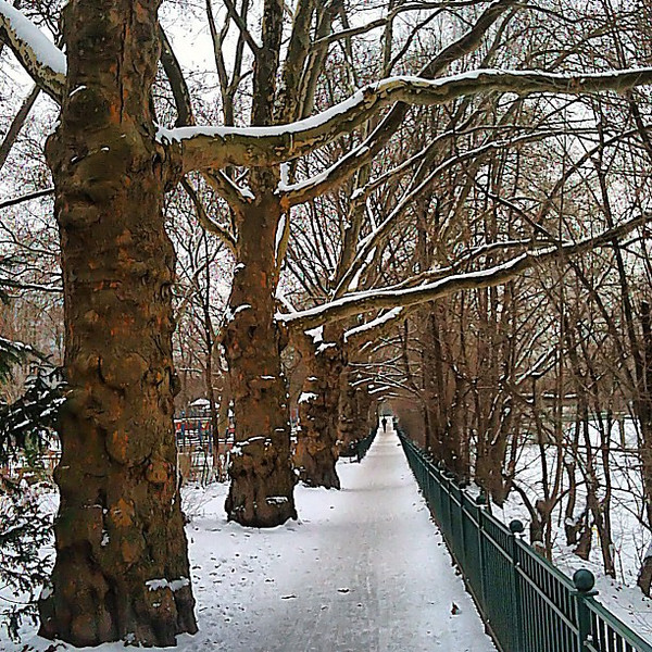 Stillness of a stroll in winter #Berlin