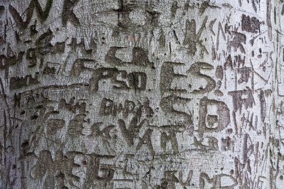 Graffiti on a tree bark in Dresden, Germany