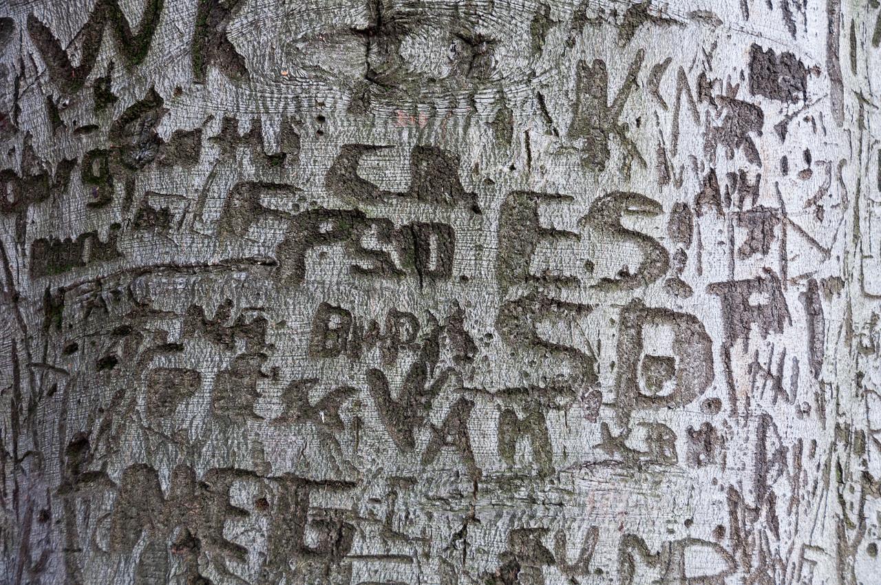 Graffiti on a tree bark in Dresden, Germany