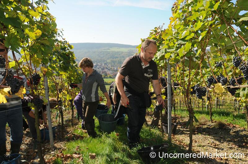 Working the Steep Vineyard Slopes -
