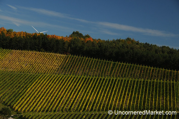 Vineyards and a Windmill - Thüngersheim, Germany