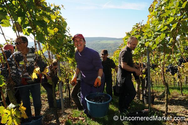 A Helping Hand - Bickel-Stumpf Winery in Thüngersheim, Germany