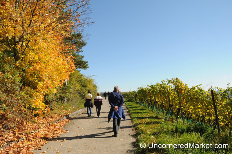 Taking a Walk Through the Vineyards - Thüngersheim, Germany