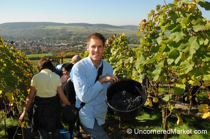 Dan and the Great Bavarian Wine Harvest - Thungersheim, Germany
