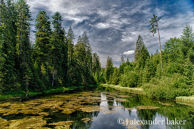 Small Lake near Gompelscheuer in the Black Forest