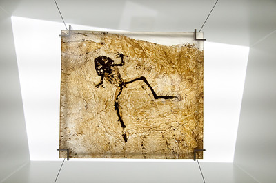 Display at the Messel Fossil Pit in Germany