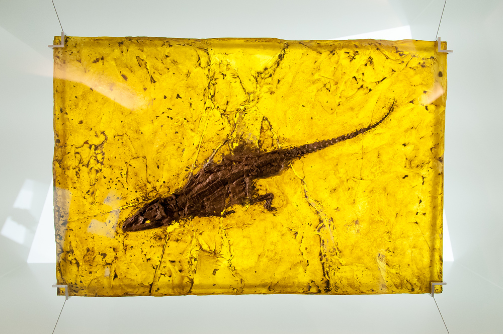 UNESCO World Heritage Site #214: Messel Pit Fossil Site