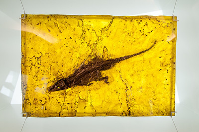 Fossil display at Messel Fossil Pit in Germany