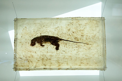 Fossil display at Messel Fossip Pit in Germany
