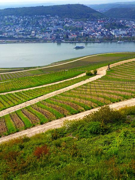 Rüdesheim Germany, View on Rhine Over Wineyards