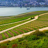 Rüdesheim Germany, View on Rhine Over Wineyards