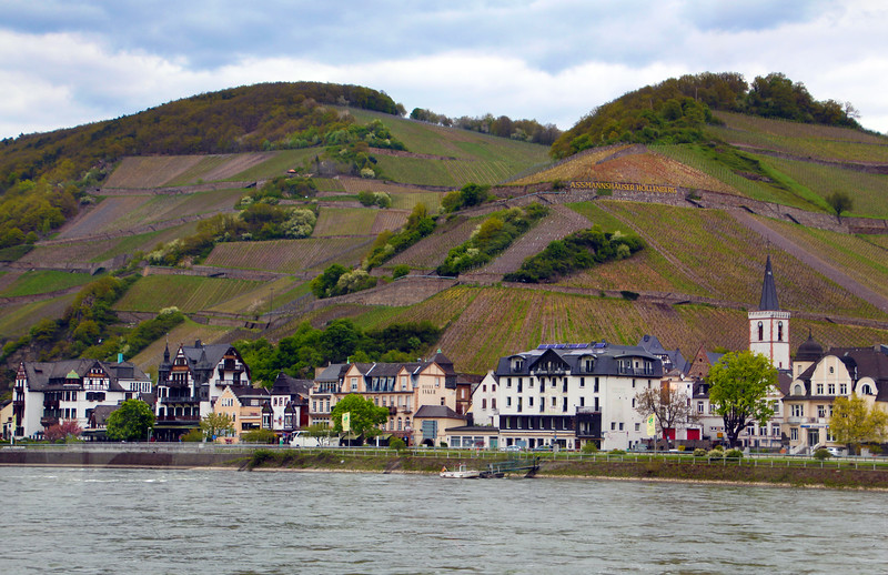 Rüdesheim Germany, View on Assmannshausen from Rhine