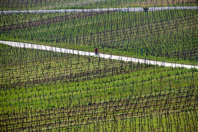 Rüdesheim Germany, Bicyclist in Vineyards