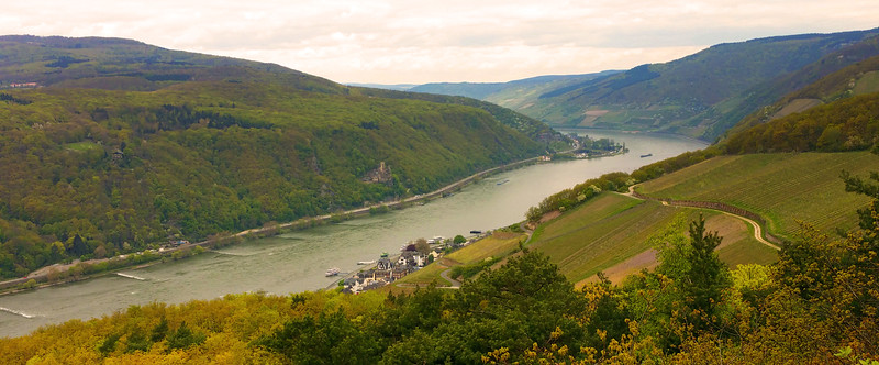 Rüdesheim Germany, View on Assmanshausen from Hiking Path