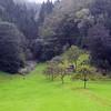 Magenta Forest