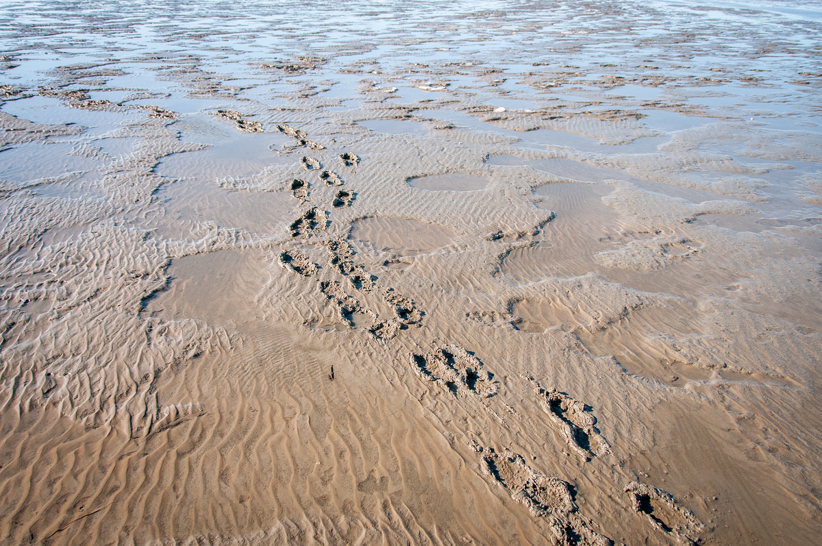 Footprints in the Wadden Sea, Germany