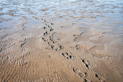 Footsteps on sand at Wadden Sea, Germany