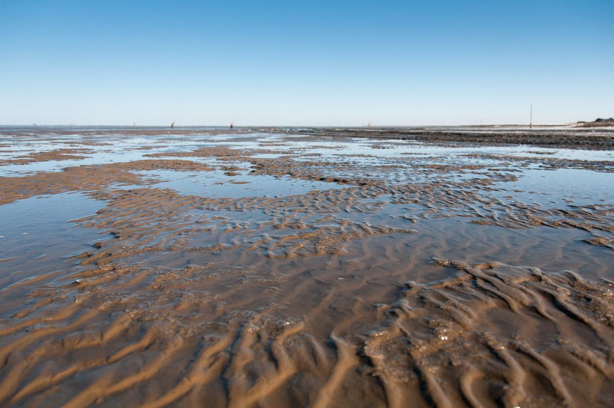 World Heritage Site #86: The Wadden Sea