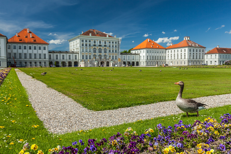 Goose in garden in front of the Nymphenburg Palace. Munich, Bavaria, Germany