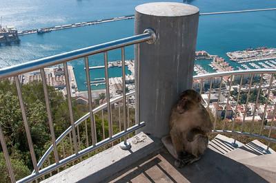 Ape hiding behind the shadow in Gibraltar